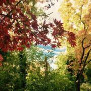 CatchBudapest-Autumn-Parks