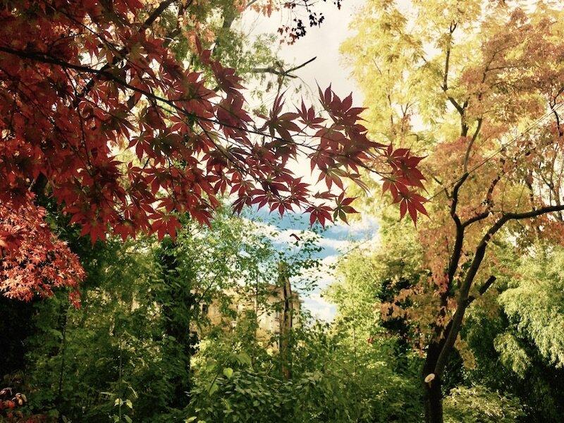 budapest-spring-fuveszkert